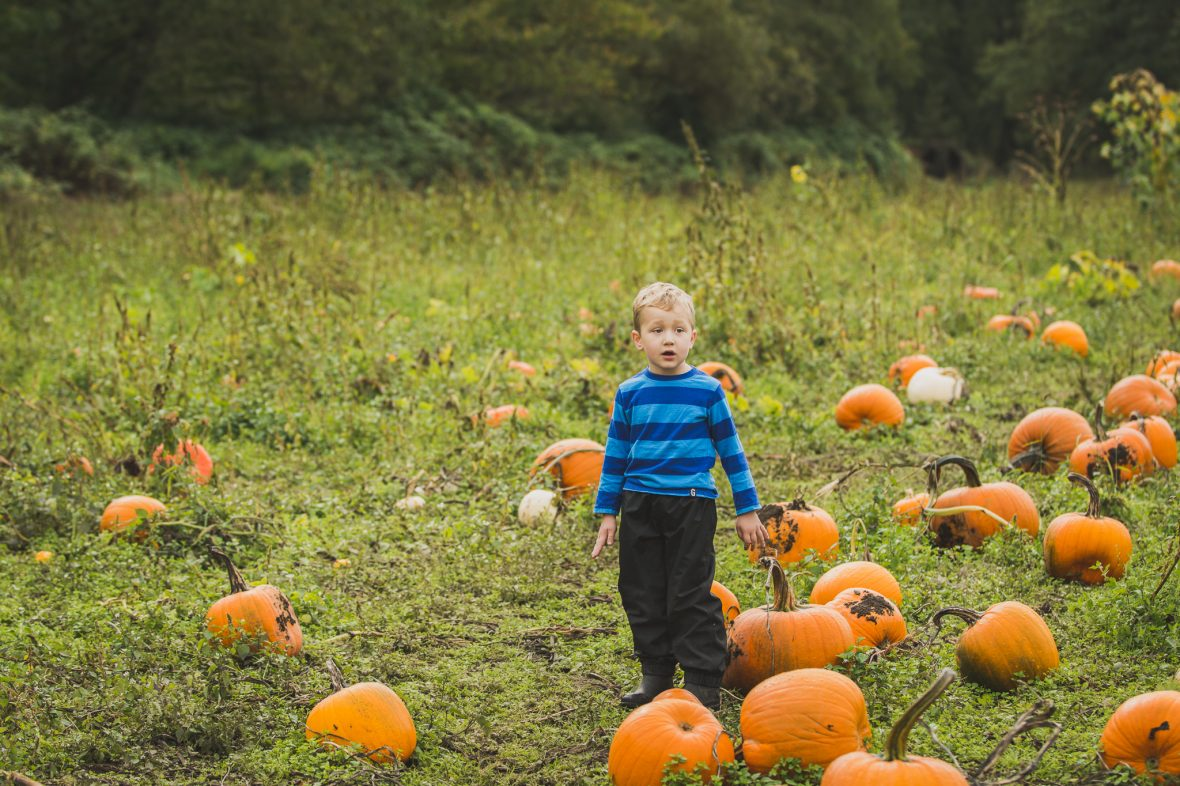 Pumpkins at Hazelmere in South Surrey